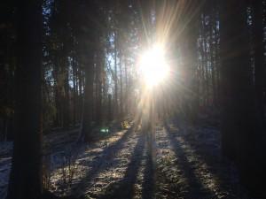 Solen tränger igenom