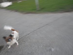 Lös hund som ägaren inte hade koll på, den skällde som bara den men bet ingen av oss, tur det! Foto: Oskar Henriksson