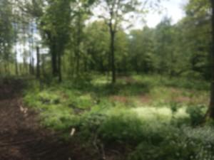 Skogen grönskas just nu!