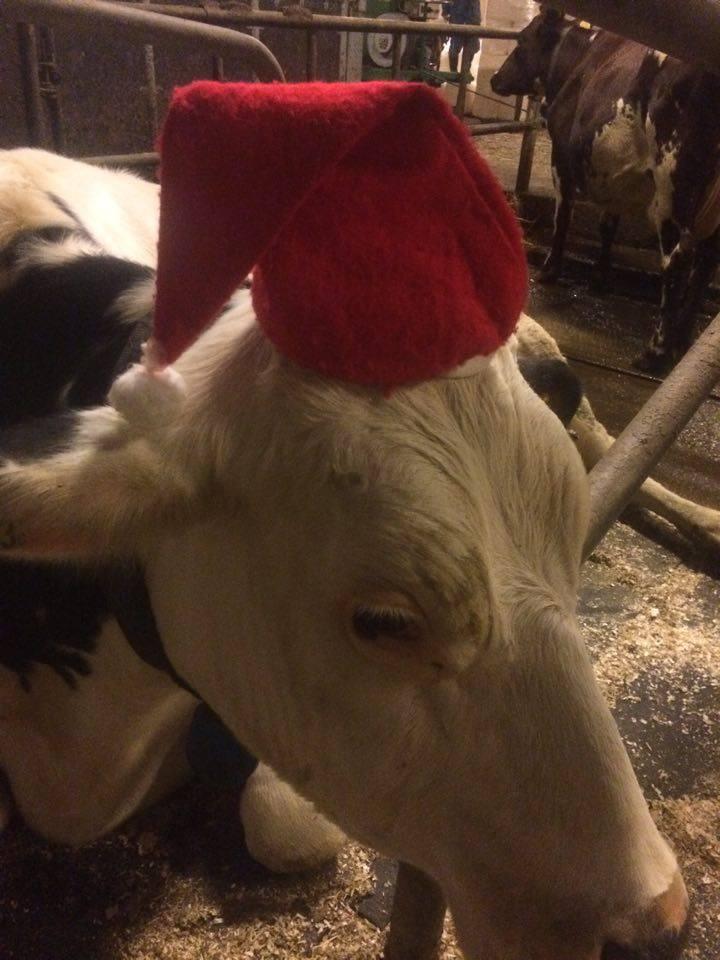 Ulla i tomteluva på julafton, fin hon är.