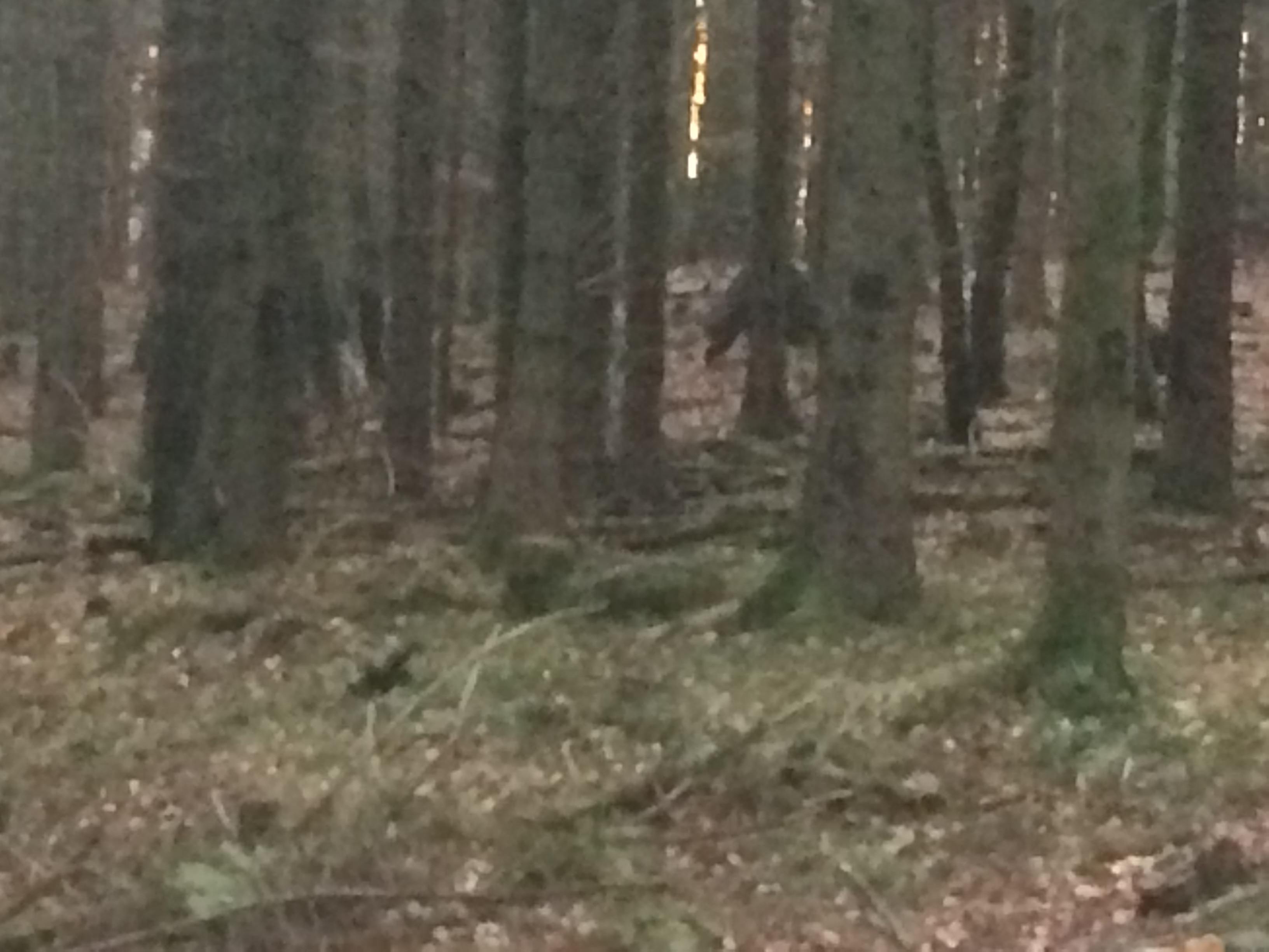 Zoomar man in bilden i mitten så ser man de två vildsvinen som tydligen föröka sig, inga som skäms där inte!