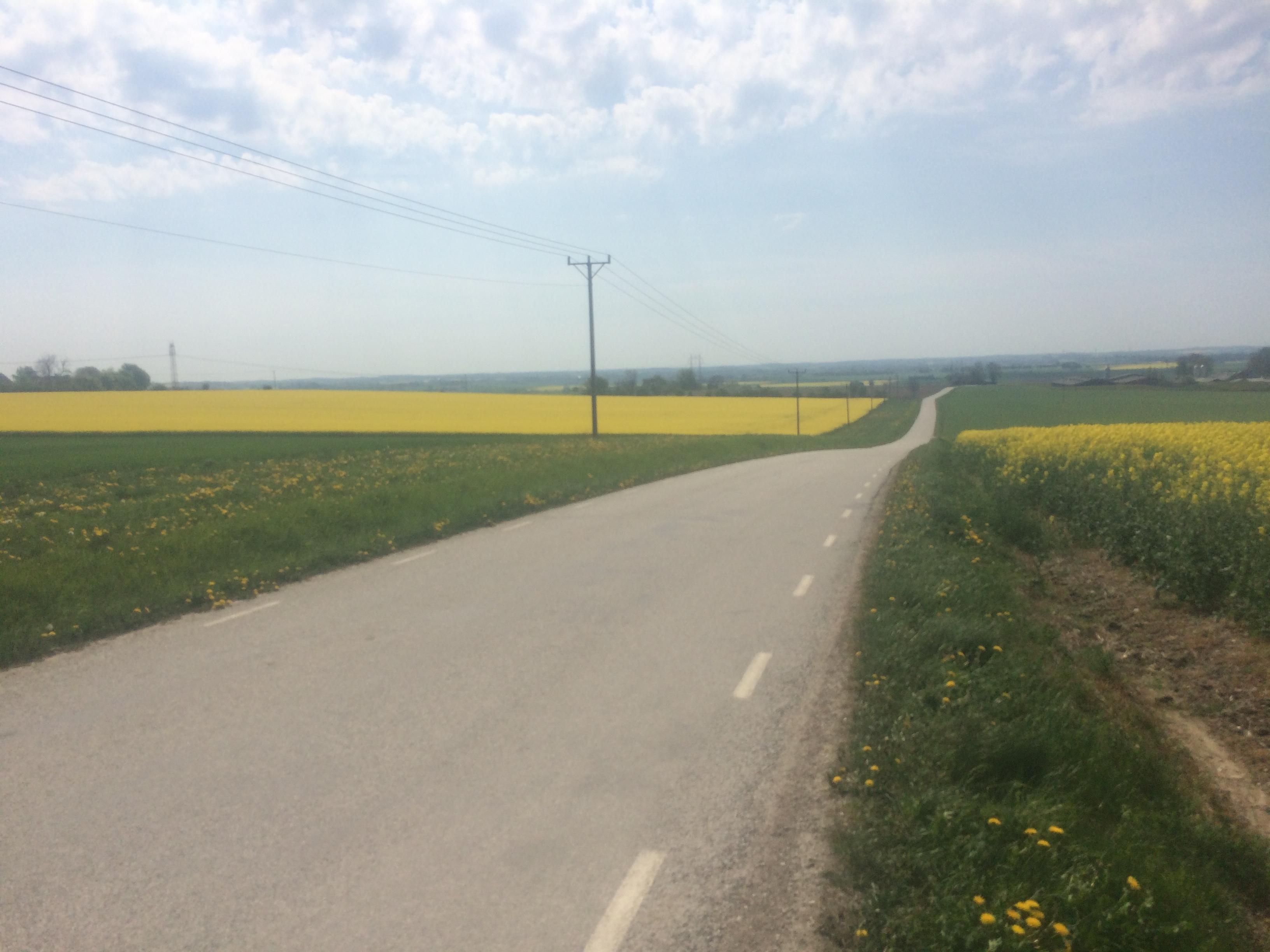 Hardebergabacken, foto som jag tog för två veckor sedan, nu har rapsen börjar blomma över i västra Skåne.