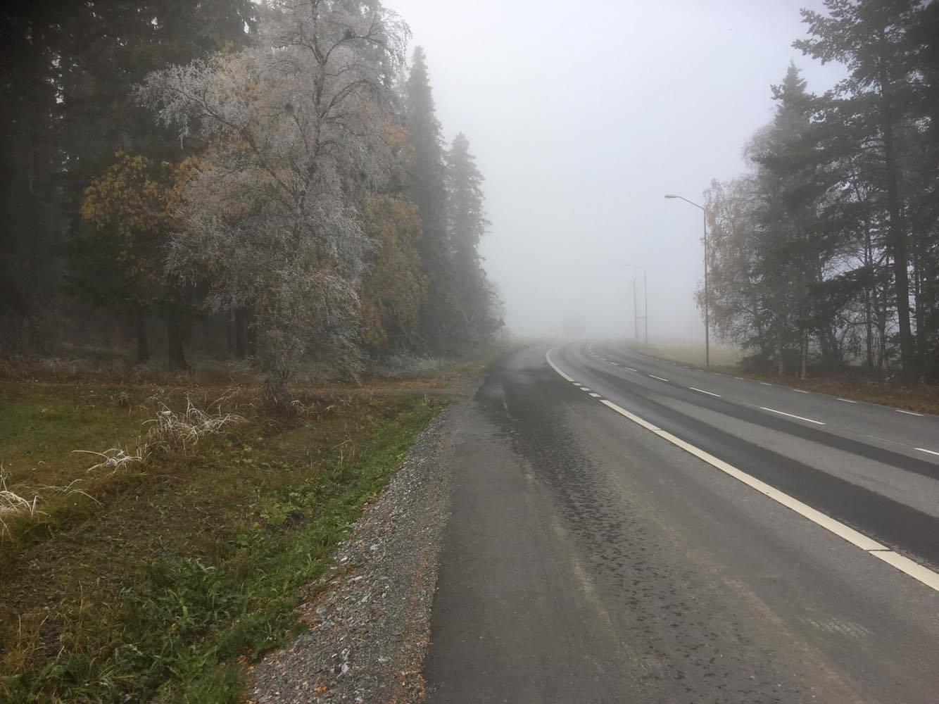 Frost på träden idag.