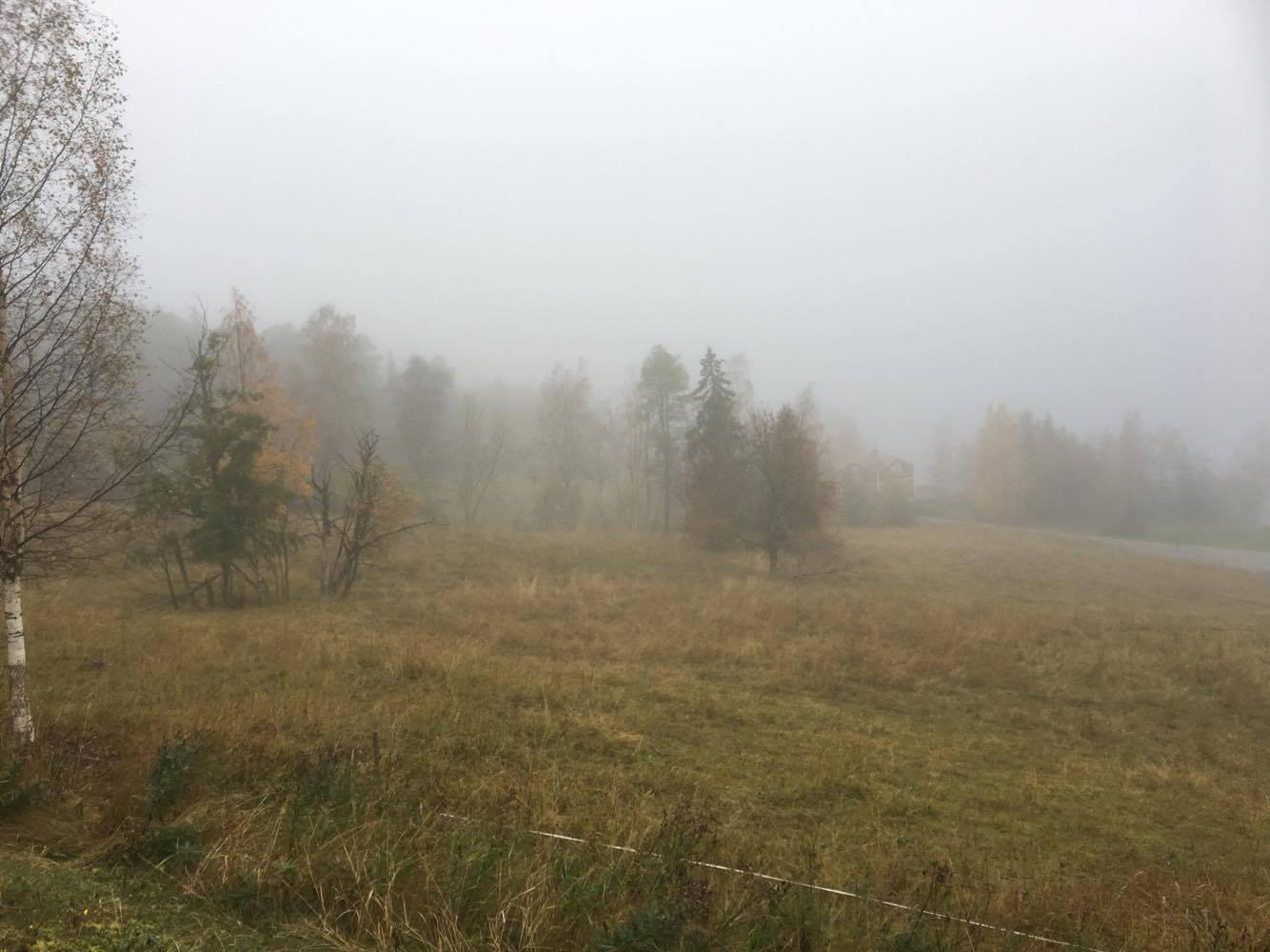 Dimma idag