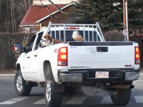 hunden på pickup
